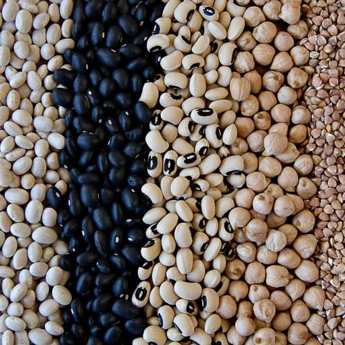 5 alimentos vegetais ricos em proteínas