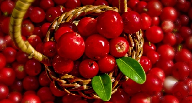Superfoods_Lingonberries_SLIDESHOW_0